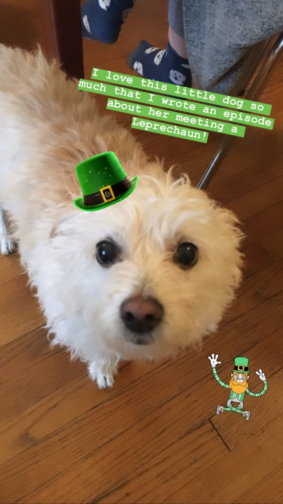 """The real Birdie! I just love this little dog who belongs to my brother. She's very dear to my heart so I wrote """"Birdie and the Unexpected Guest"""" about her meeting a LEPRECHAUN. Happy St. Paddy's Day, folks. https://aprileight.com/2017/03/16/ep-21-birdie-and-the-unexpected-guest/"""